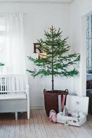 potted trees make every room festive cafemom