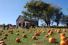 Pumpkin Patch St Louis Mo by 13 Charming Pumpkin Patches Near Washington Dc