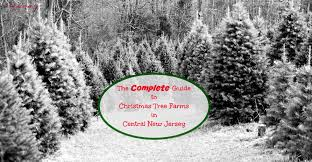 evergreen christmas tree farm christmas lights decoration