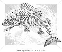 skeleton images illustrations vectors skeleton stock photos