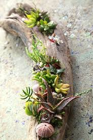 How To Make A Succulent Planter It U0027s Surprisingly Easy To Make A Succulent Driftwood Planter That