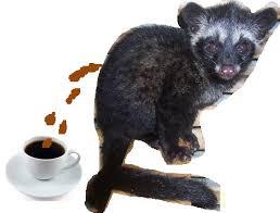 Luwak Coffee kopi luwak coffee numbertwoguide