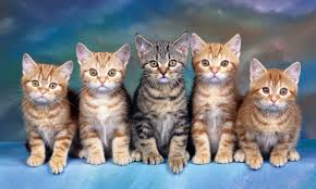 halloween kitten wallpaper hd widescreen cat wallpaper wallpapersafari