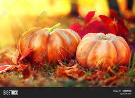 autumn halloween pumpkin thanksgiving day background pumpkin