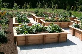 Creative Vegetable Gardens by Beautiful Wood For Raised Vegetable Garden Raised Vegetable Garden