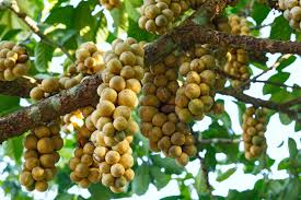 8 fruits to try before you die britannica com