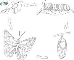 100 monarch butterfly coloring page butterfly coloring
