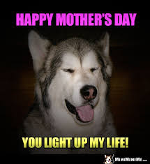 Dog Mom Meme - happy mother s day mom funny party animals wish mommy mother