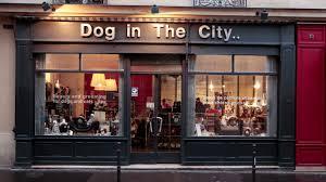salon du luxe salon de toilettage pour chien et chat à paris dog in the city