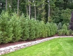 leyland cypress tree best deals garden to doorstep