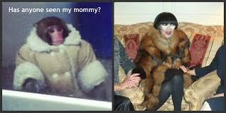 Ikea Monkey Meme - ikea monkey looking for mommy ikea monkey know your meme
