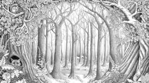 pencil drawing of forest quiet forest artefantastico drawing pencil