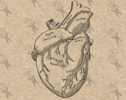 human heart art etsy