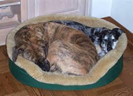 Cats In Dog Beds Pet Products Equestrian U0026 Pets