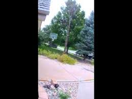 removing a 50 foot pin oak tree in 20 seconds