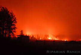 Wildfire Bc Jobs by From The Chilcotin B C Wildfire Front A Rotational Grazer U0027s