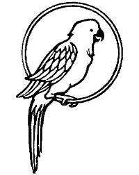 parrot pet colouring happy colouring