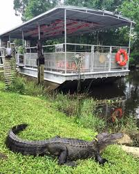 Louisiana wildlife tours images 11 swamp boat tours in louisiana that will make you fall in love jpg