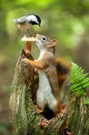 best 25 what do squirrels eat ideas on pinterest squirrels
