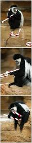 129 best fun for the zoo images on pinterest zoo animals