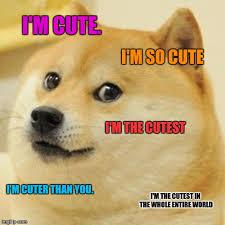 Cutest Memes - doge meme imgflip