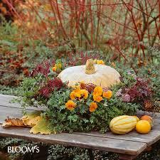 herbstbepflanzung balkon bloom s album