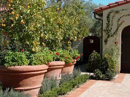 lavender trumpet vine landscape mediterranean with planters cotta