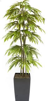 plant ficus wonderful tree plants top 5 indoor plants and