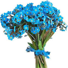 blue flowers blue flowers org blueflowersorg