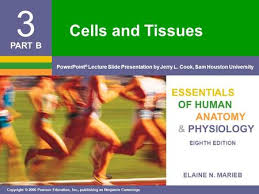 Anatomy And Physiology Cells And Tissues Essentials Of Human Anatomy U0026 Physiology Ppt Video Online Download