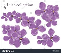 lilac vector collection spring decoration element stock vector