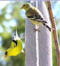 Audubon Backyard Bird Count great backyard bird count flathead audubon society