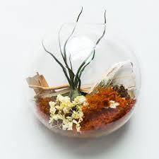 custom terrarium kestrel