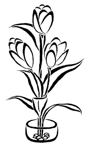 simple drawing parrot tulip coloring kids play color