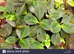 floor plant leaves on floor amazon rainforest stock photos u0026 leaves on floor