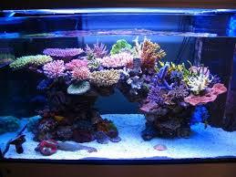 Live Rock Aquascaping Best 25 Reef Aquascaping Ideas On Pinterest Nano Reef Tank