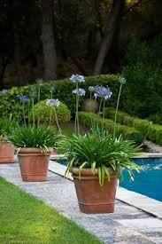 Landscaping Around Pools by Tropical Pool Poolside Landscape Design Pictures Remodel Decor