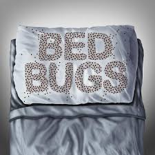 Dont Let The Bed Bugs Bite Don U0027t Let The Bed Bugs Bite For Papa U0027s Sake Home Care For Families