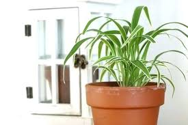 house plants low light indoor tall plant low light indoor plants low light houseplants low