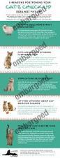 press pr american association of feline practitioners