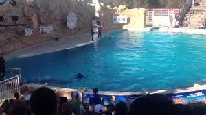 Six Flags Dolphin Swim Six Flags México Dolphin Discovery Youtube