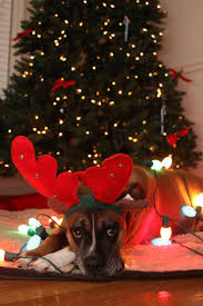 334 best christmas animals images on pinterest christmas animals