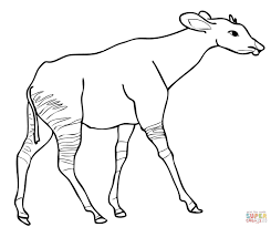okapi from central africa coloring page free printable coloring