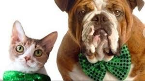 9news com st patrick u0027s day adoption special at foothills animal