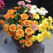 Fake Flowers In Bulk China Wholesale Silk Flowers China Wholesale Silk Flowers