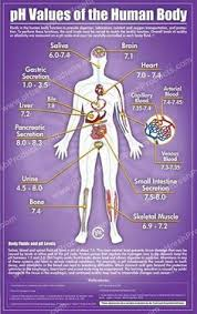 Pictures Of Anatomy Of The Human Body Body Organs Location Chart Some Of The Organs In The Human Body