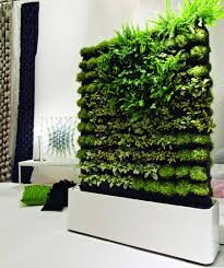 future indoor green wall for eco friendly home made from fern