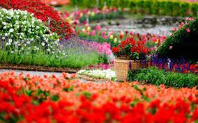 images of flower garden wallpapers sc