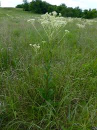 native prairie plants eco landscaping natural landscapes for central oklahoma