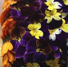 organic edible flowers 9 best dahlias maddocks farm organics growing and using organic
